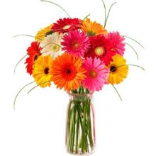 12 Mixed Color Gerberas in Vase Pampanga