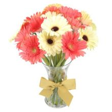 12 Mixed Gerberas in Vase Pampanga