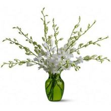 10 Stems White Orchids in Vase Pampanga