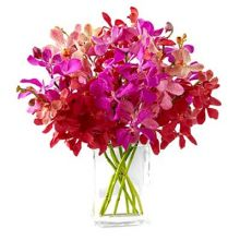 12 Red & Purple Stems Orchids in Vase Pampanga