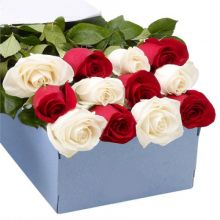 12 Red and White Roses in Box