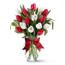 15 Red & White Tulips with Glass Vase in Pampanga