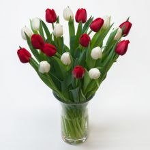 20 Red & White Tulips with Vase in Pampanga