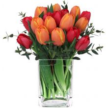 20 Red & Orange Tulips with Glass Vase in Pampanga